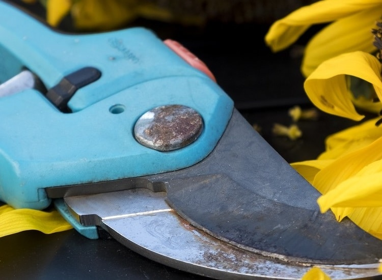 Top 5 Different ways on how to Disinfect Garden Shears, Hand Pruners, and Hedge Shears at Home