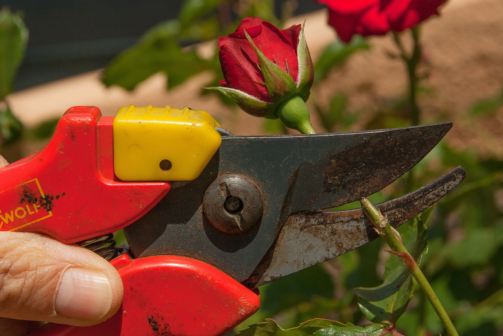 A Detailed Comparison for Manual vs Electrical vs Gas Powered Garden Shears